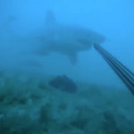 Crazy Bastard Fights Off a Great White